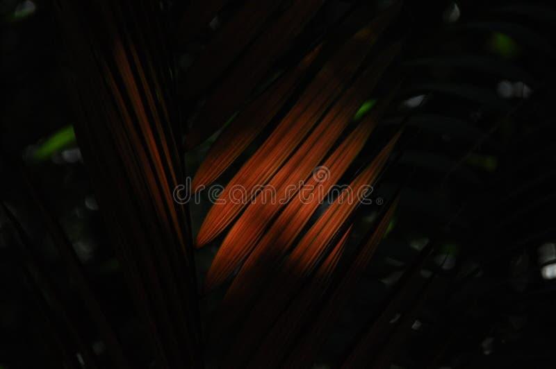 Liście tropikalne rośliny, palmy w świetle słonecznym przy dnem las w dżungli fotografia stock