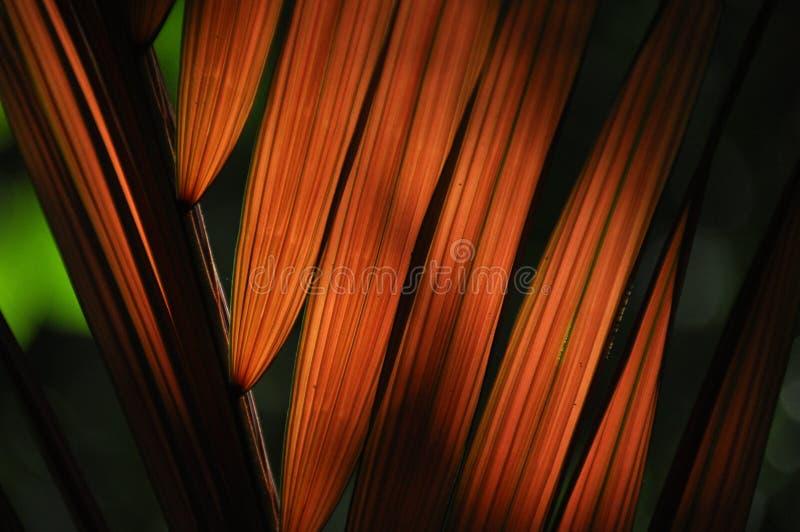 Liście tropikalne rośliny, palmy w świetle słonecznym przy dnem las w dżungli zdjęcia stock