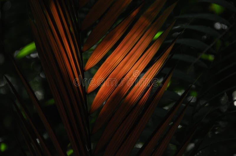 Liście tropikalne rośliny, palmy w świetle słonecznym przy dnem las w dżungli zdjęcia royalty free