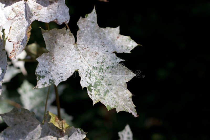 liście umrzeć obraz stock