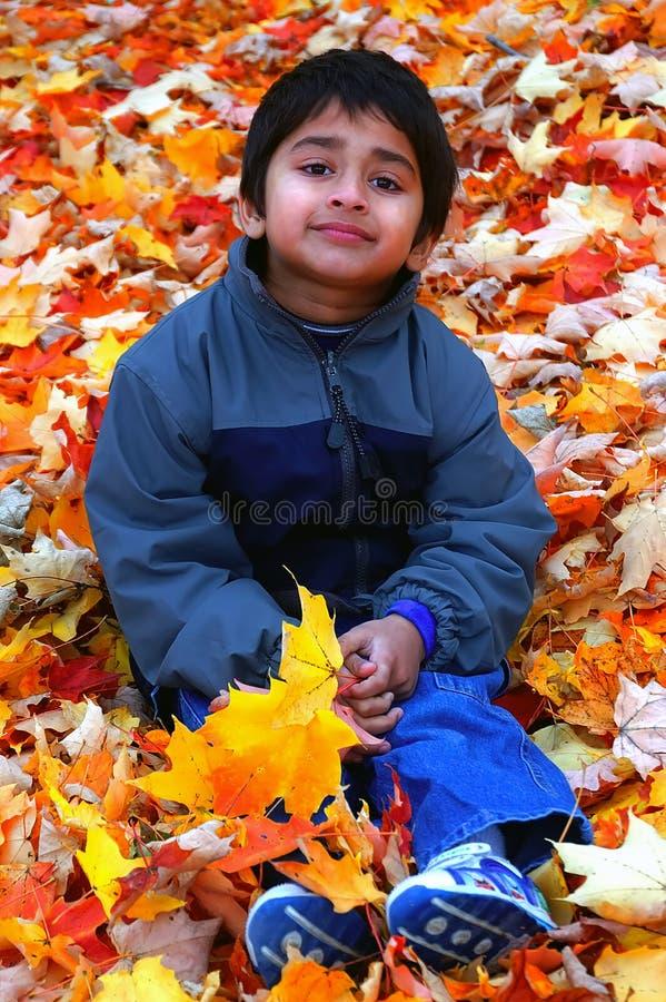 liście upaść zdjęcie stock
