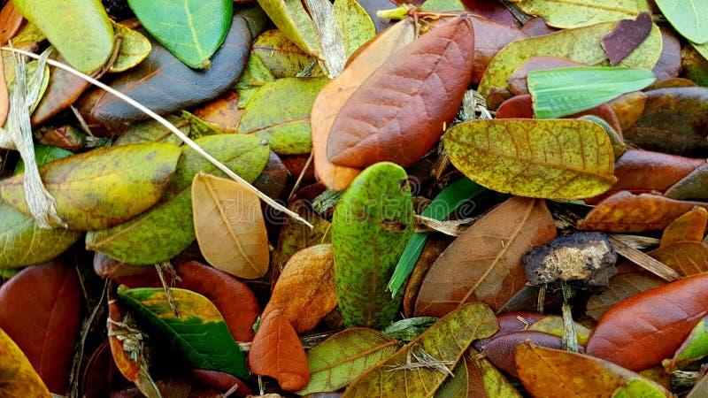 liście upaść obrazy stock