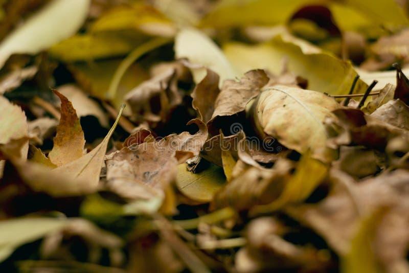 Liście w jesień lesie obraz royalty free