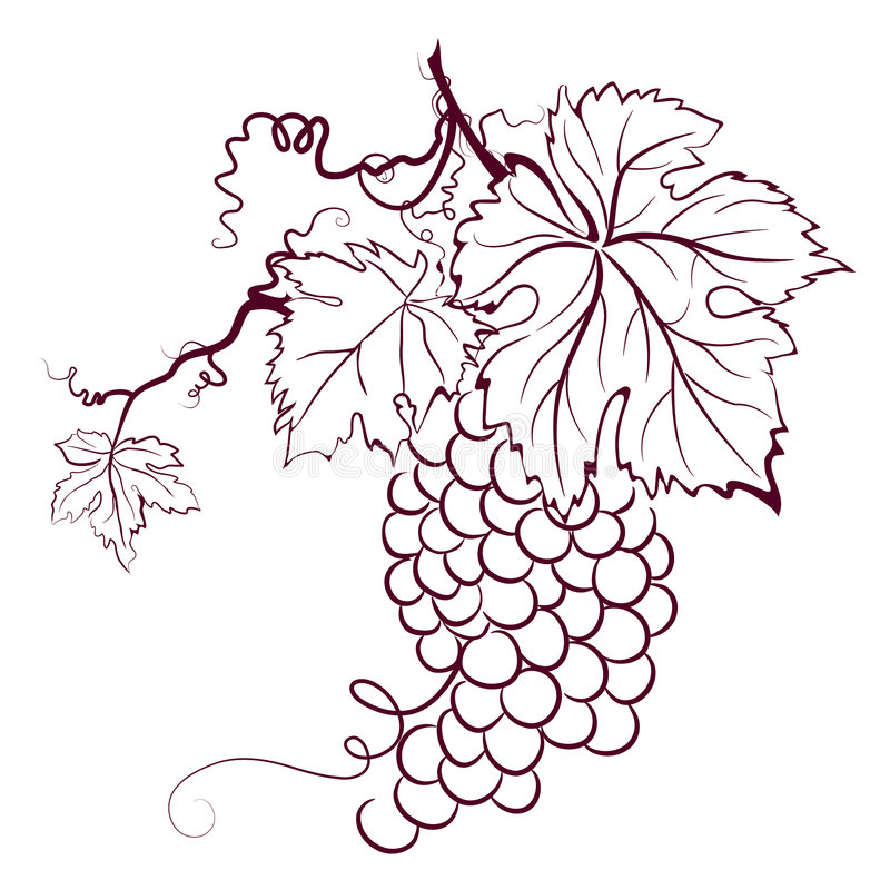 liście winogron royalty ilustracja