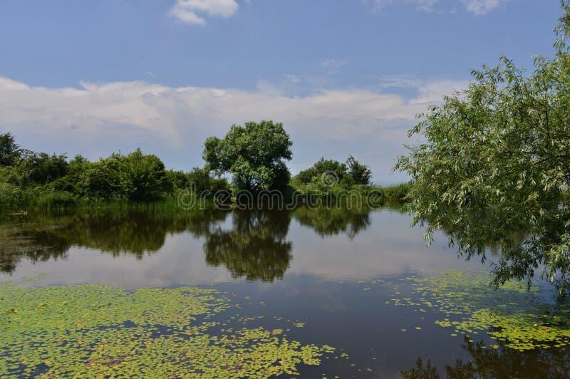 Liście wodne leluje na jeziorze ukazują się zdjęcia stock