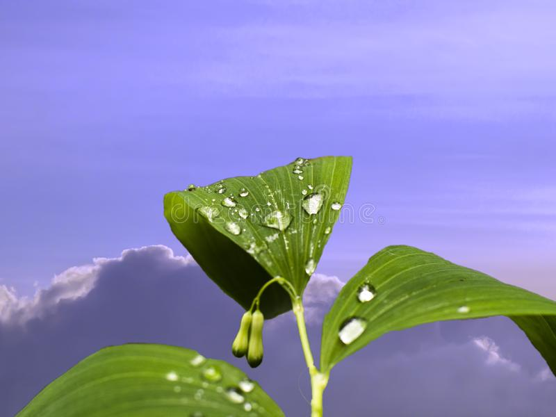 liście z kroplami woda przeciw niebu obraz stock