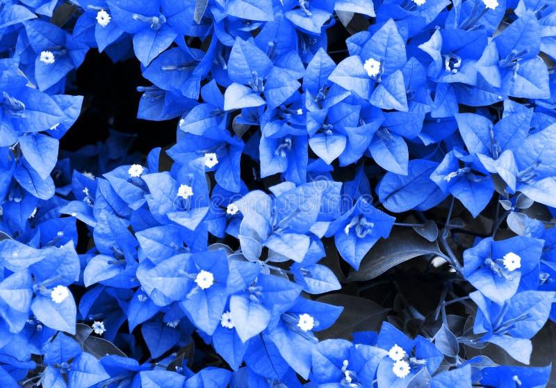 Liście zmrok - błękit obraz stock