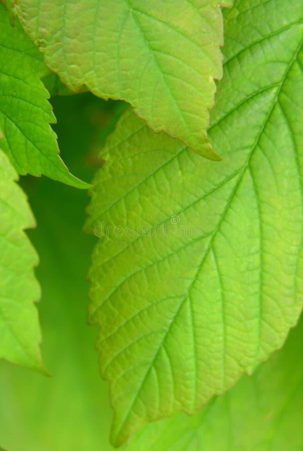 Download Liście zdjęcie stock. Obraz złożonej z tło, natura, tekstura - 118414