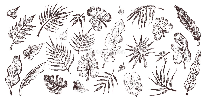 li?? ustawiaj? tropikalnego Ręka rysująca ilustracja palmowi liście ilustracji