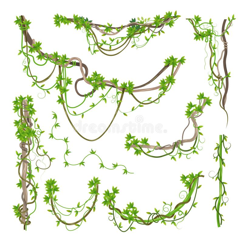 Liana or jungle plant greenery winding branches royalty free illustration