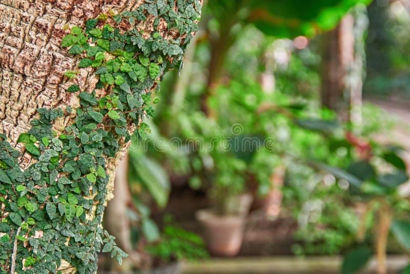 Liana op de palmboomstam in de serre stock afbeeldingen