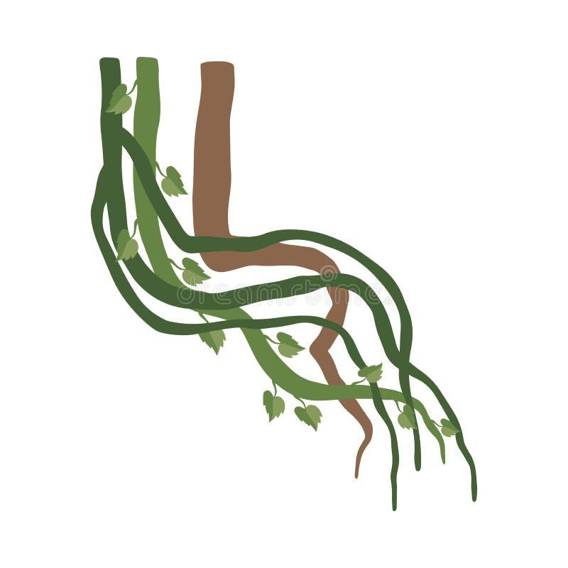 Liana Winding Branches mit Blättern, Dschungel-Betriebsdekoratives Element, Regenwald Flora Vector Illustration stock abbildung
