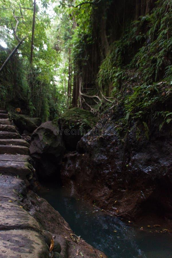 Lianas que cuelgan del árbol en bosque tropical imagen de archivo