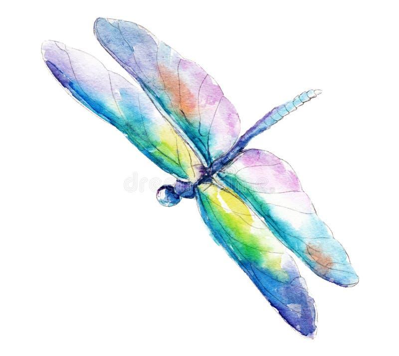 A libélula azul esverdeado, ilustração da aquarela isolada no branco ilustração stock