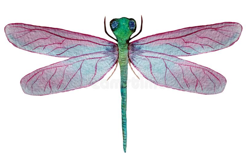 Libélula con las alas rosadas en un fondo blanco ilustración del vector