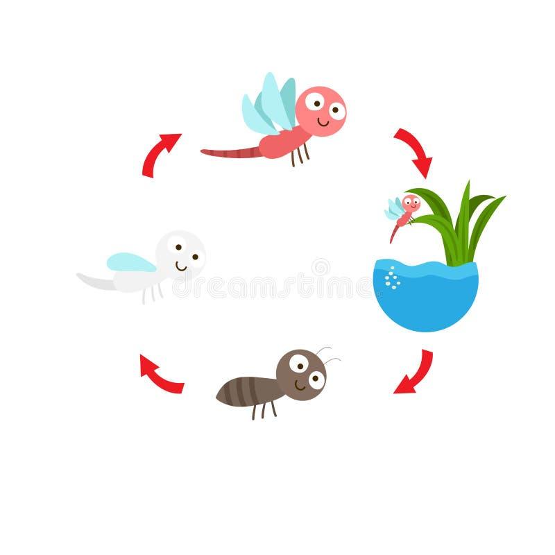 Libélula del ciclo de vida del ejemplo stock de ilustración