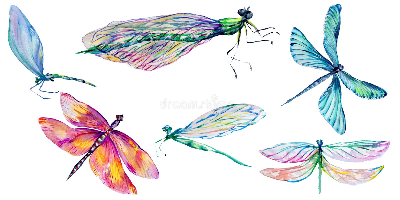 Libélula del insecto fijada en un estilo de la acuarela libre illustration