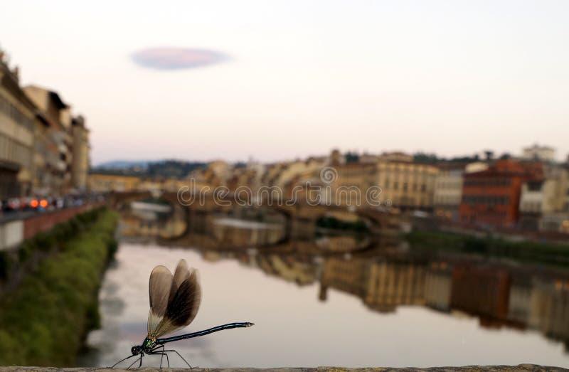 Libélula en Florencia imágenes de archivo libres de regalías