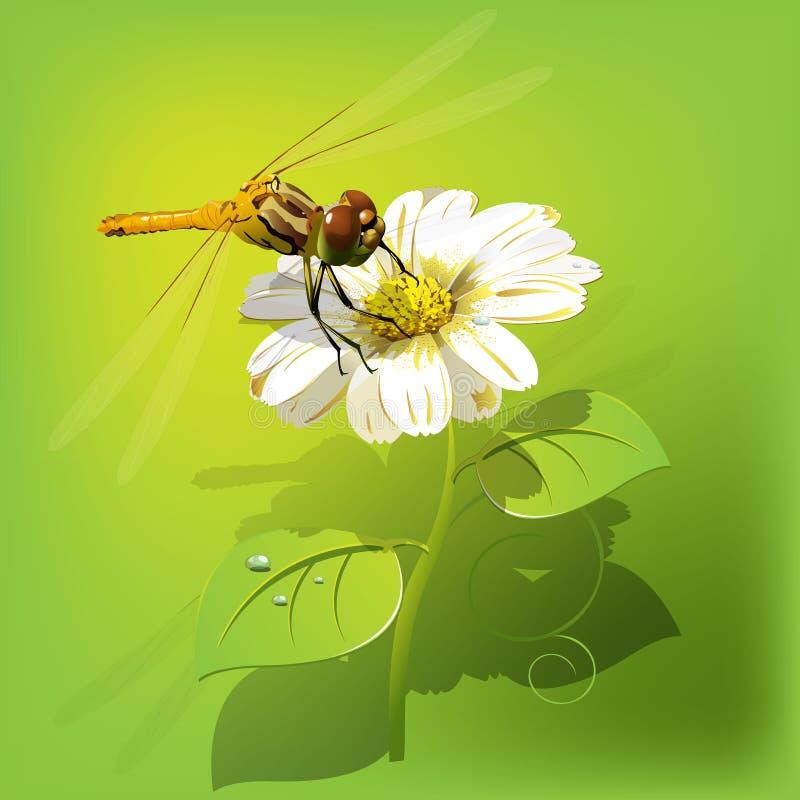 Libélula en la flor ilustración del vector
