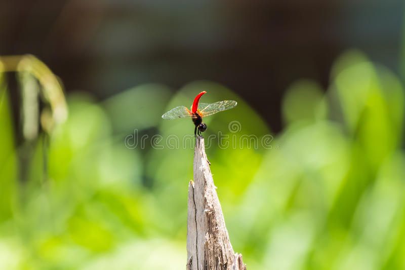 libélula preciosa imagenes de archivo