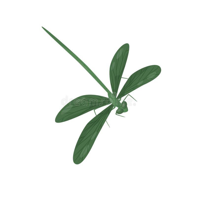 Libélula verde clara Pequeño insecto de vuelo rápido con el cuerpo largo y dos pares de alas Criatura frágil Vector plano stock de ilustración