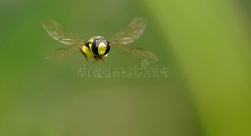 Libérez la mouche photos stock