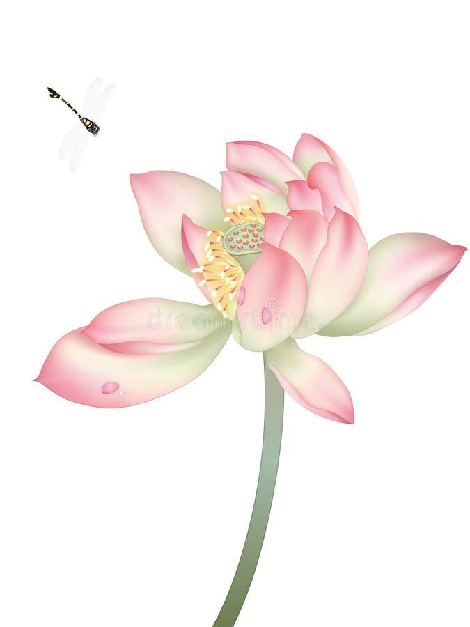 Libel en Mooie Waterlelie stock illustratie