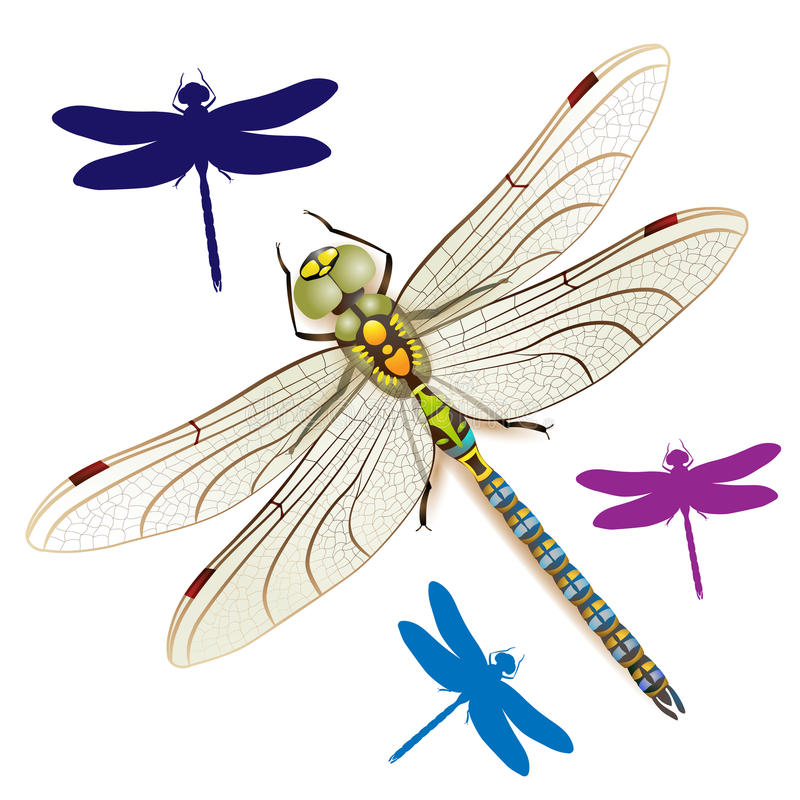 Libelle vektor abbildung