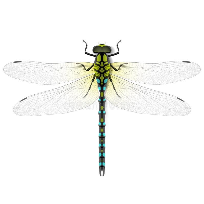 Libelle lizenzfreie abbildung