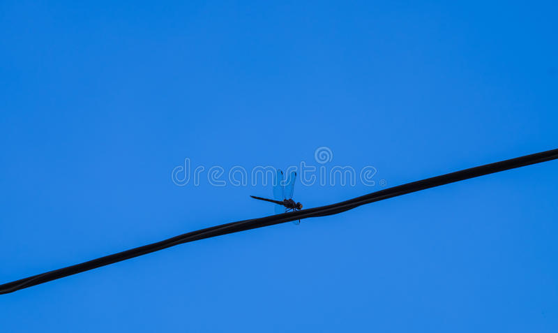 Libelle auf einem Kabel lizenzfreies stockfoto