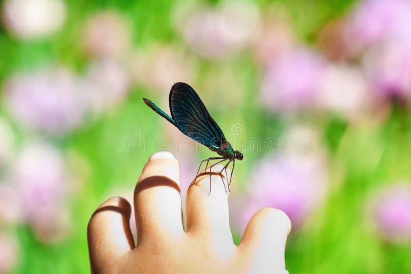 Libelle auf Kinderhand stockfotos