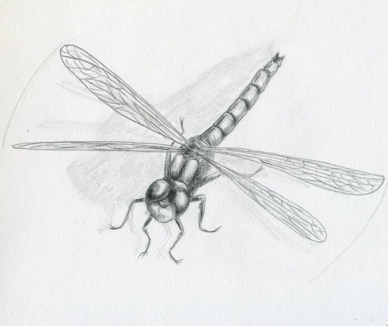 Libelle - Skizze vektor abbildung