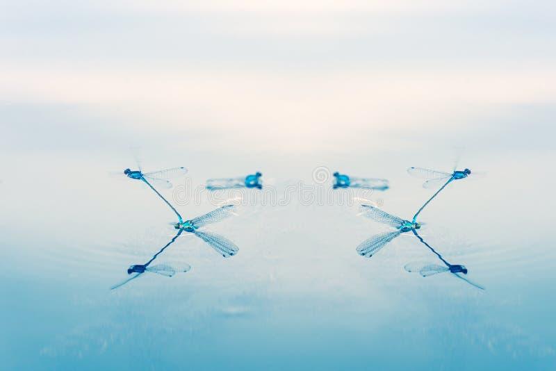 Libellen als aerobatic team in de hemel Geometrische die cijfers door libellen worden gecreeerd royalty-vrije stock afbeeldingen