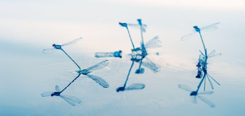 Libellen als aerobatic team in de hemel Geometrische die cijfers door libellen worden gecreeerd royalty-vrije stock foto