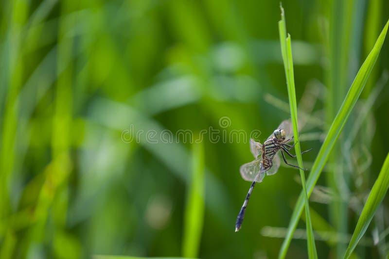 Libellenbauernhoffeld backdround stockbild