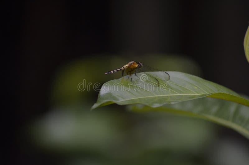 Libellenlandung lizenzfreie stockbilder