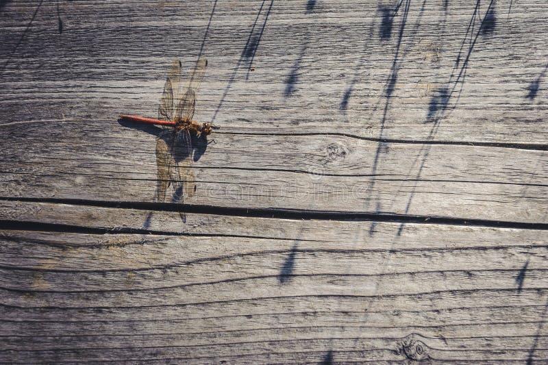 Libellula sul fondo di legno della vecchia plancia fotografie stock libere da diritti