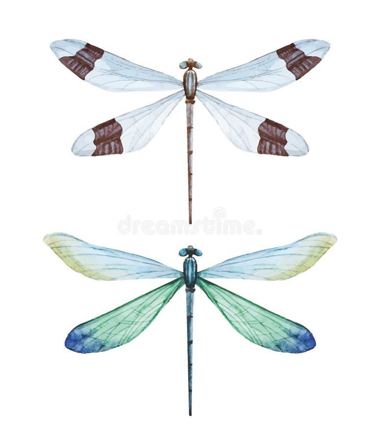 Libellules d'aquarelle illustration stock