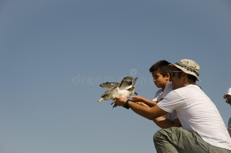 Liberación de una meauca cory foto de archivo libre de regalías