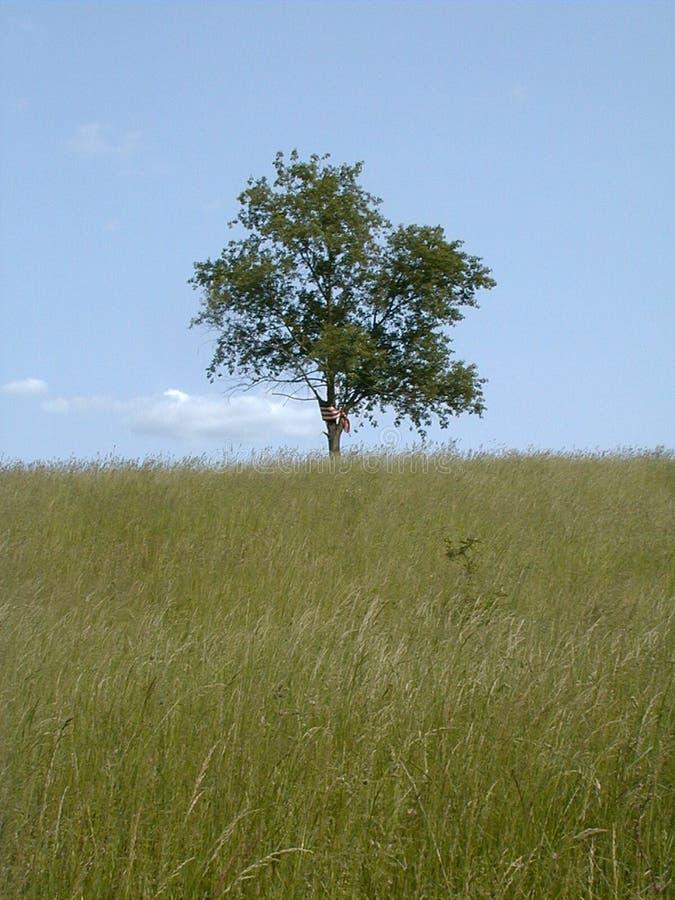 Libertà & solitudine 1 - colore fotografie stock