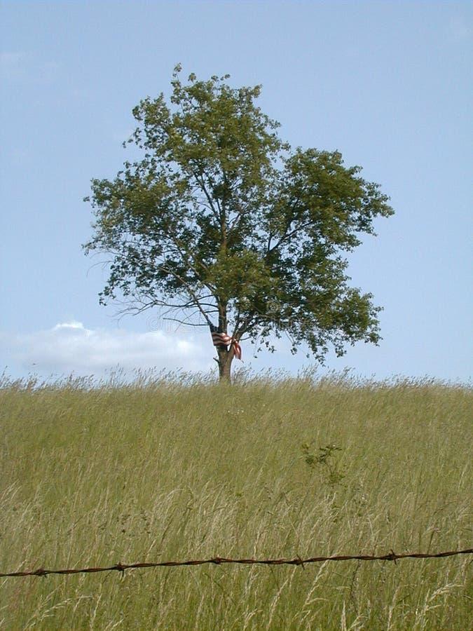 Libertà & solitudine 2 - colore fotografia stock libera da diritti