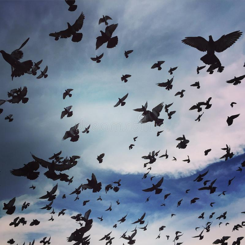 Libertad del cielo azul imagen de archivo libre de regalías