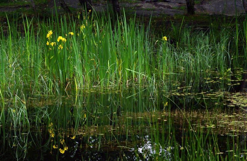 Libra en el bosque de Fontainebleau fotografía de archivo libre de regalías