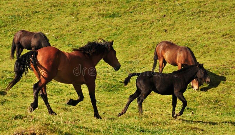Libre courant photographie stock libre de droits