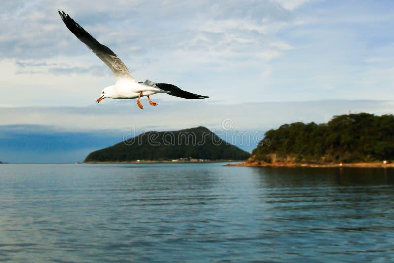 Libre determinado del pájaro fotos de archivo