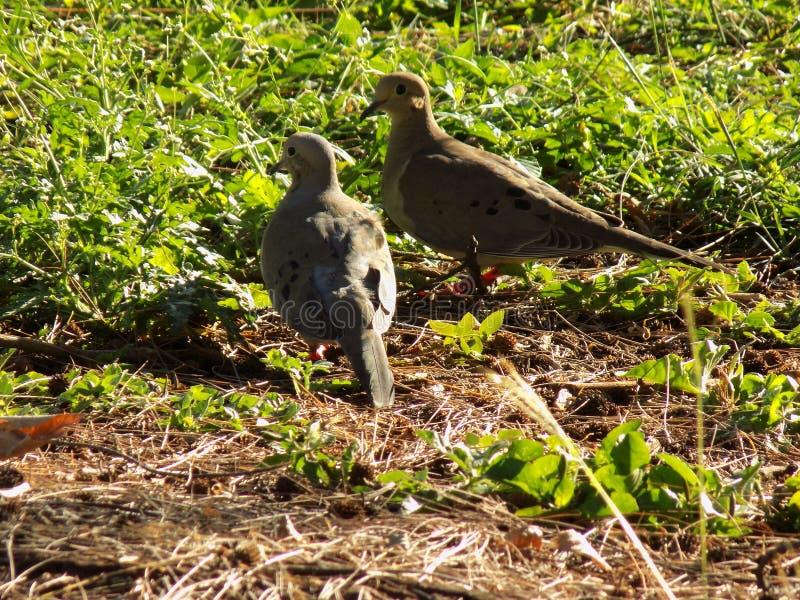 Libres d'aves de ticas de ³ d'exà d'aves de tropicales d'Aves photographie stock