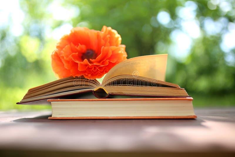 Libri aperti all'aperto La conoscenza è potenza Prenoti in un libro della foresta su un ceppo immagine stock libera da diritti