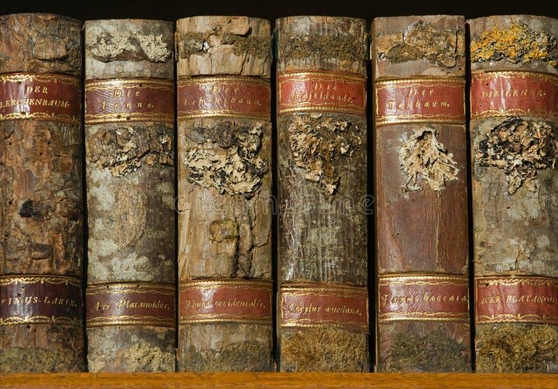 Libri di legno di Xylotheca alla mensola fotografie stock libere da diritti