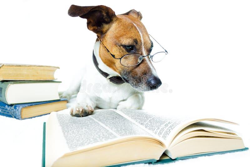 Libri di lettura del cane immagine stock