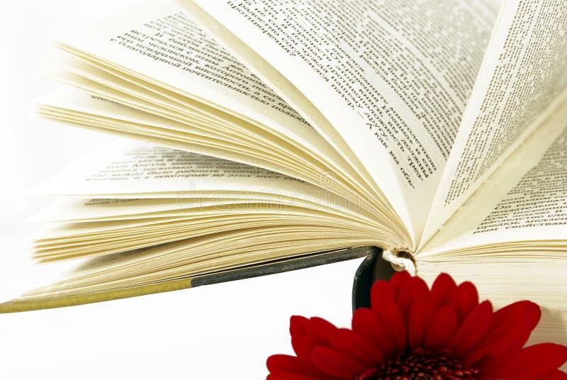 Libro abierto con una flor roja. imagen de archivo